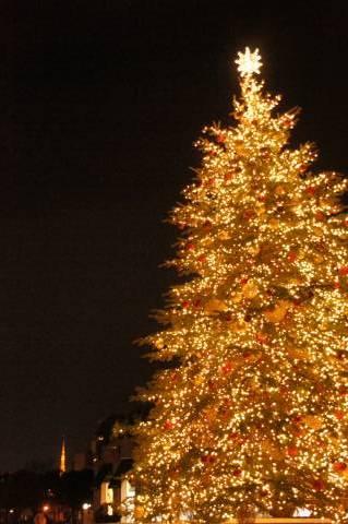 恵比寿ガーデンプレイスのクリスマスツリーと東京タワー