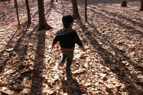 木々の間を走り抜けて
