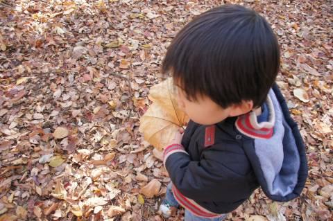 大きな落葉