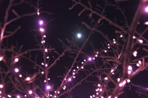 月とイルミネーション
