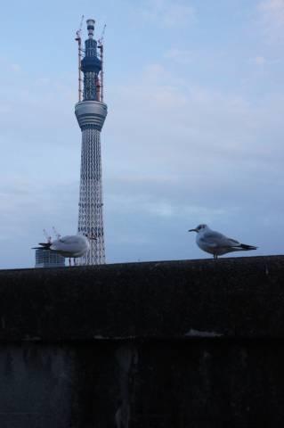 東京スカイツリーを見つめて