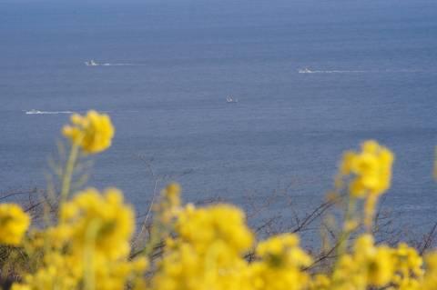 白波をたてる船と菜の花