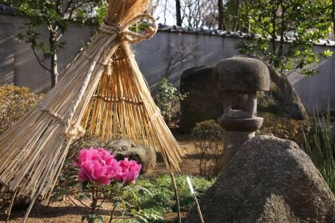 上野東照宮・冬牡丹