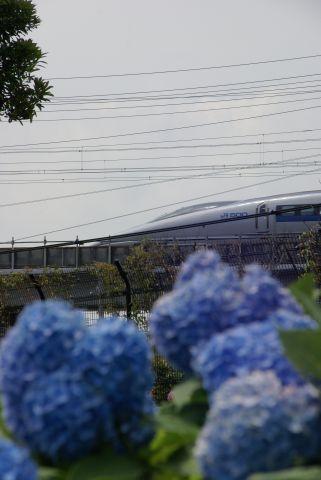 紫陽花と500系新幹線