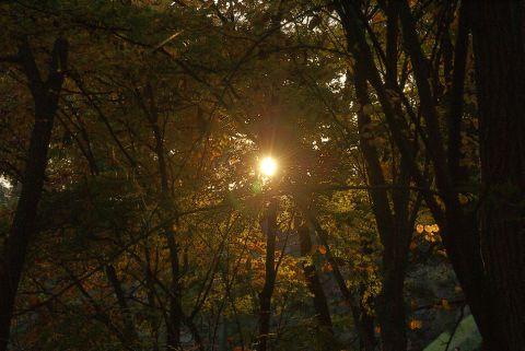 差し込む夕日
