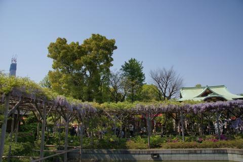東京スカイツリーと亀戸天神