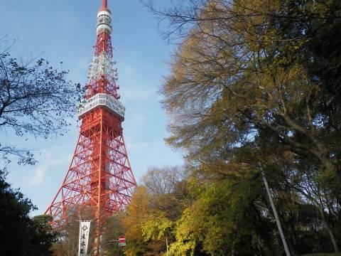 悠真撮影・東京タワー3