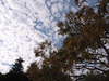 色づき始めた木も圧倒されてます