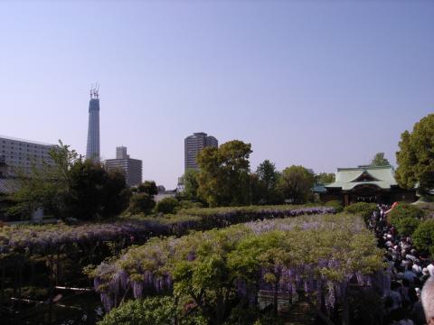 亀戸天神と東京スカイツリー