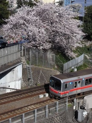桜と丸の内線