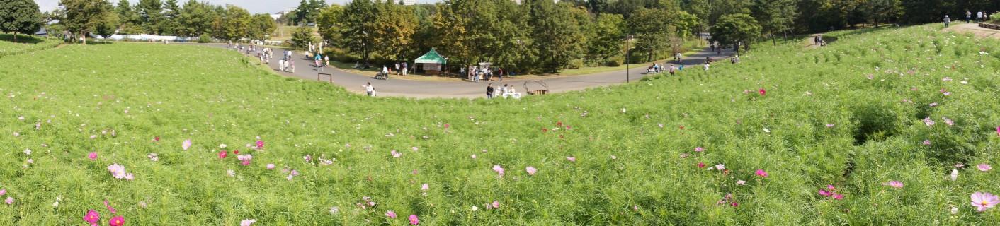 花の丘・スイングパノラマ