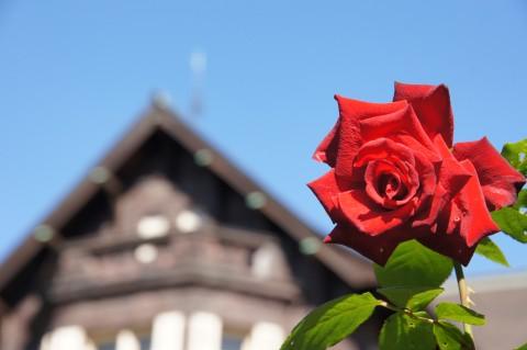 薔薇・熱情