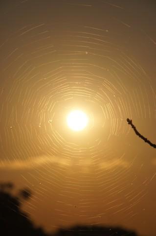 クモの巣に捕らえられた夕日