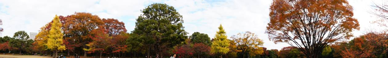 北の丸公園の紅葉