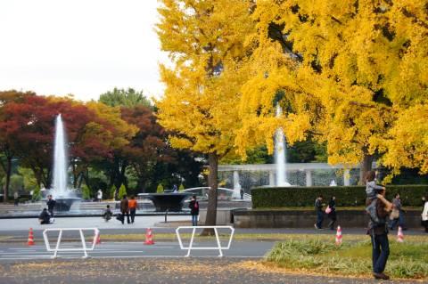 和田倉噴水公園とイチョウ