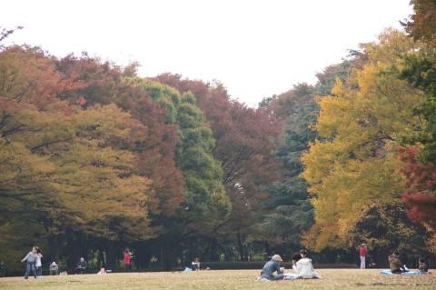砧公園の緑地