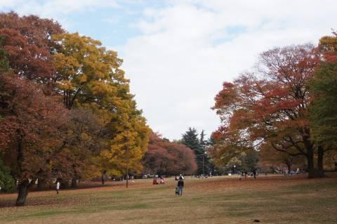 広大な砧公園