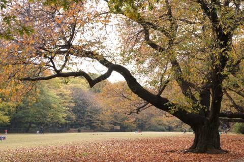 砧公園・桜紅葉