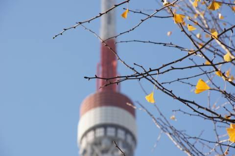 東京タワーと葉っぱのフレディ
