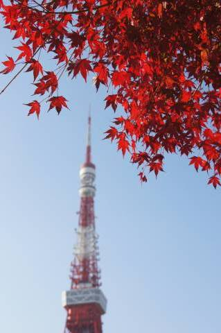 東京タワーと赤さ比べ