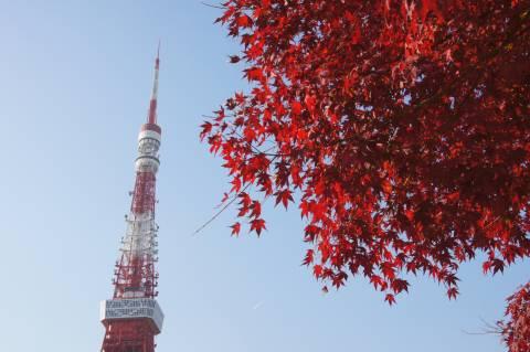 東京タワーとモミジ