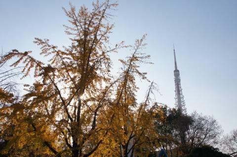 東京タワーとイチョウのオバケ