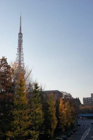 イチョウの木の行進を見守る東京タワー