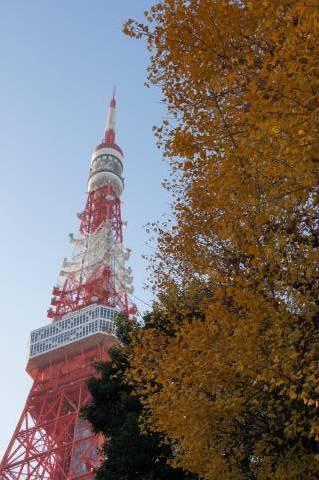 イチョウの木に寄りたがりたそうな東京タワー