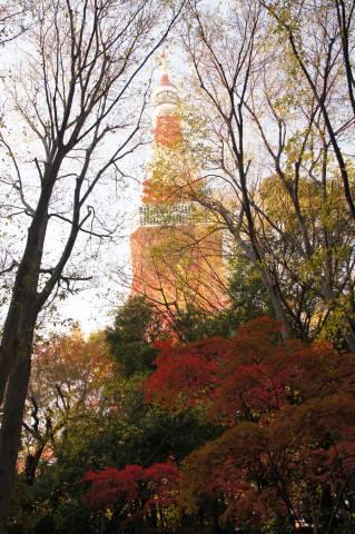 もみじ谷から見上げた東京タワー