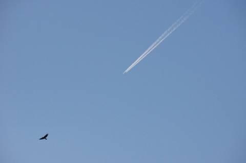 カラスを追う飛行機雲