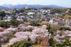 桜の甍毯1