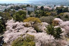 桜の甍毯2