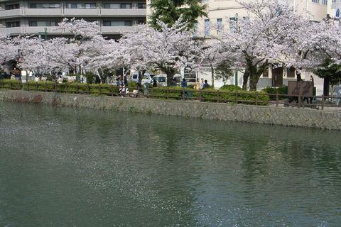 桜流れる2