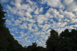 雲が広がってますよ