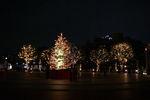 時計広場もツリーと共にライトアップ!