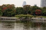 小の字島の向こう岸も紅葉に包まれ始めました。