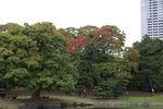 池の周りのあちこちで紅葉が進んでますね。