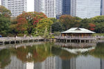 池の水面も紅葉の季節を迎えましたね。