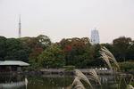 ススキの向こうの紅葉と東京タワー