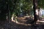 これぞ木漏れ日。気持ちのいい緑道。