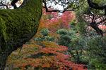 苔むすスタジイの向こうの紅葉。歴史を感じる瞬間!