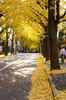 端に寄せられたイチョウの葉っぱも一つの風景を作ってます。