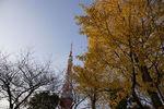 ついでにイチョウと東京タワーも捉えた!