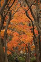 木々の合間からのぞくモミジが鮮やか