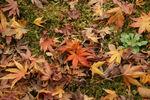散った葉の横に新しい草の芽が。季節は流れています