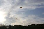 雲に届けと揚がる凧