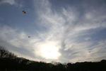 右へ左へ風に吹かれて舞い躍る凧
