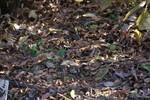 落葉の絨毯でかくれんぼする雀たち。見つかるかな