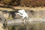 羽をバタつかせて逆噴射して着陸しますよ!