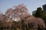 周りをビルに囲まれた小石川後楽園